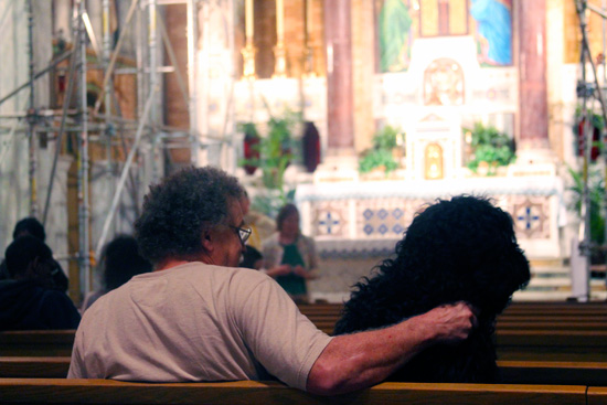 "A dog in the pew at St. Francis De Sales for the ""Blessing of the Animals."""