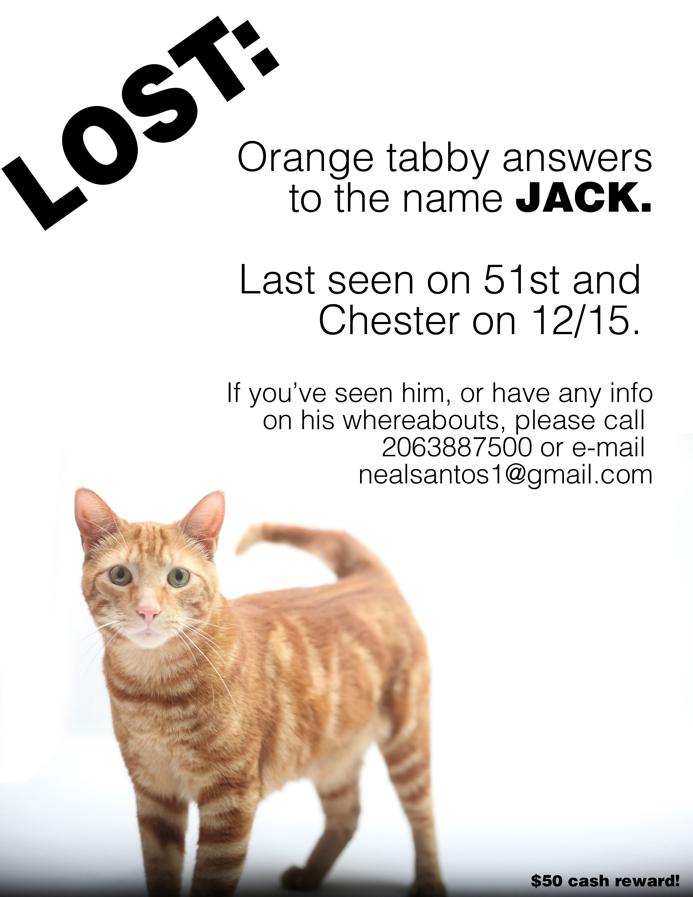 ... cat missing from 45th and osage july 23 2013 orange tabby cat frankie