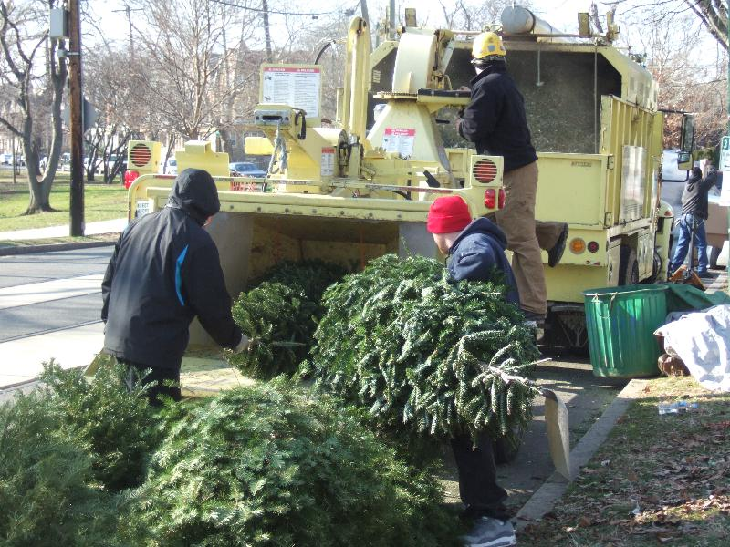Many neighbors have started looking for ways to get rid of their Christmas  trees, so here are a few options. - Christmas Tree Recycling West Philly Local