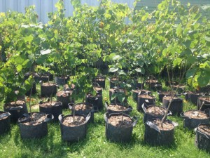 tree-authority-nursery-visit-7-16-1
