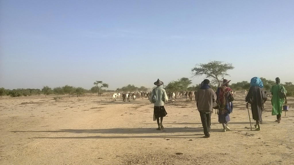 Fulani cowboys driving their cattle to water (Photo by Anna Badkhen)
